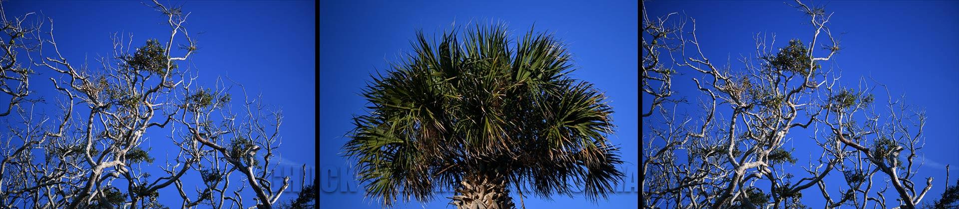Triptych Palm